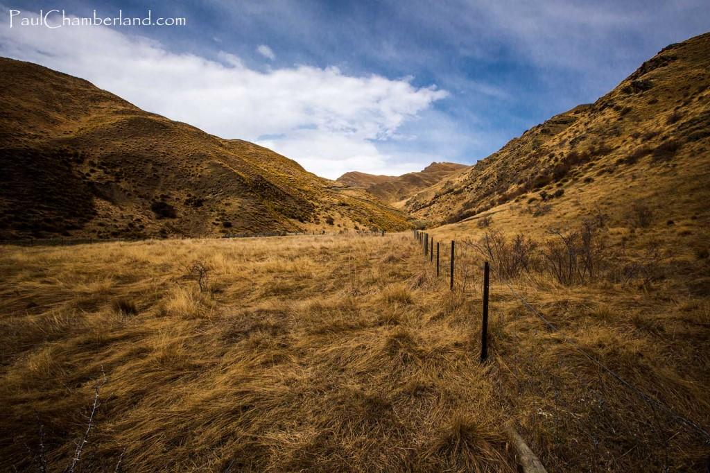 Nouvelle Zélande-île du sud-Champs